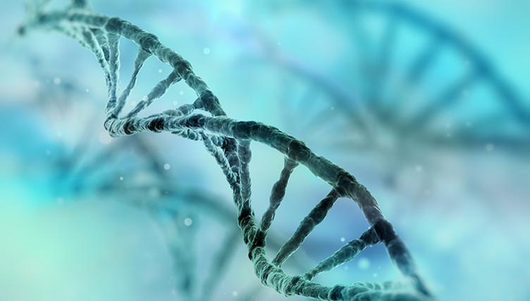 DNA-Ladder.jpg