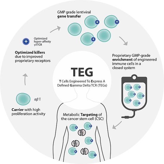 Gadeta-gamma-delta-T-cells.jpg