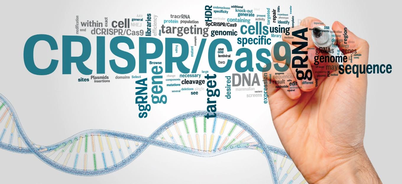 Fragile-X-CRISPR-Cas9.jpg