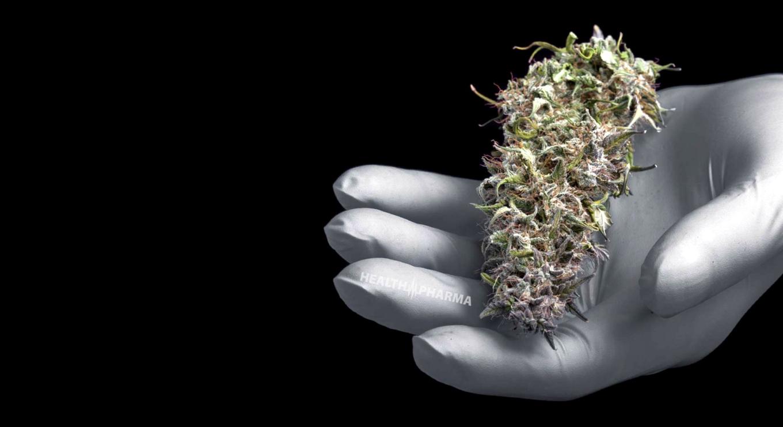 cannabis15