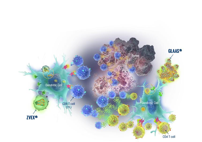 Immune-Design-Science-Illustration-®