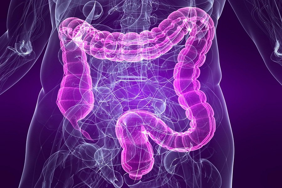 Large-intestine-bowel-diagram